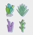 cactus and plant cartoons vector image vector image