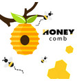 honeycomb bee hive white background image vector image