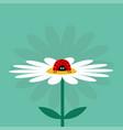 ladybug ladybird insect on white daisy chamomile vector image vector image