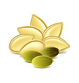 Pumpkin seeds isolated on white vector image vector image