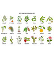 best natural herbs for fast weight loss vector image vector image