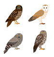 different owl set vector image vector image