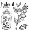Jojoba Oil Jar vector image vector image