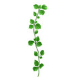 sprig with green leaves vector image vector image