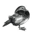antique mandarin duck hand draw vintage vector image vector image
