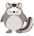 fat chipmunk on white background vector image