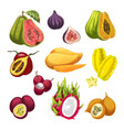 exotic and tropical fruit watercolor vector image vector image