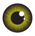 green iris eye realistic set design isolated on vector image vector image