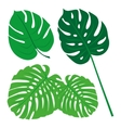 Tropical Leaves Collection isolate Set vector image vector image