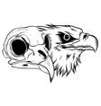 cartoon a bird skull vector image vector image