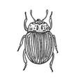 colorado beetle sketch engraving vector image vector image