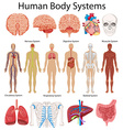 Diagram showing human body systems vector image vector image