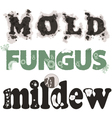 Mold fungus and mildew vector image vector image