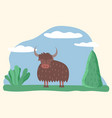 muskox or bull wild animal standing on meadow vector image vector image