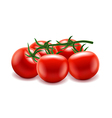 Tomatoes branch isolated on white vector image vector image