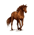 Brown horse pacing calm in wild vector image