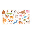 collection funny adorable wild exotic and vector image