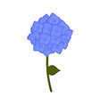 isolated hydrangea flower icon vector image vector image