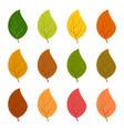 twelve autumn leaves in different autumn colors vector image