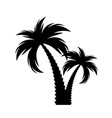 black palm tree silhouette vector image