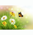 Nature summer daisy flowers with butterfly vector image