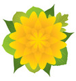 yellow flower with leaves vector image vector image