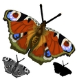 Beautiful colored butterfly isolated vector image