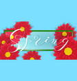 gerbera or daisy flowers on white background and vector image vector image