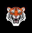 tiger head face portrait black background vector image vector image