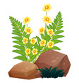 yellow flowers and ferns on white background vector image vector image