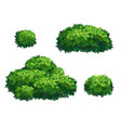 green bushes and tree crown vector image vector image