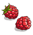 Raspberries 001 vector image