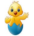 cartoon little baby chicken in the blue broken egg vector image vector image