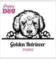 puppy golden retriever - peeking dogs - breed face vector image vector image