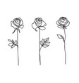 rose flower set continuous drawing line art vector image vector image