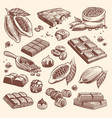 sketch cocoa and chocolate cacao and coffee seeds vector image