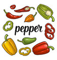 whole half slice different types of pepper vector image vector image