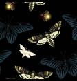 pattern with death head hawk moth vector image vector image