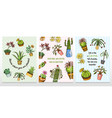 set of cards cactus and cute template succulents vector image vector image