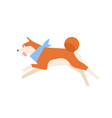 frisky akita inu running or jumping active funny vector image vector image