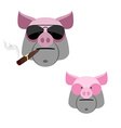 Pig with a cigar Scary and angry Boars head on a vector image vector image