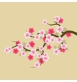 Sakura Flowers Background Cherry Blossom vector image vector image
