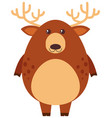 brown deer on white background vector image