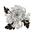 chrysanthemum flower black and white vector image vector image