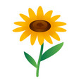 sunflower icon isometric style vector image