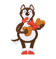 husky dog in red boots holds huge bone in ribbon vector image vector image