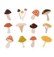 set mushrooms in a flat style vector image