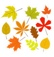 collection beautiful colourful autumn leaves vector image vector image