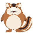 cute chipmunk on white background vector image vector image