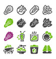lettuce icon set vector image